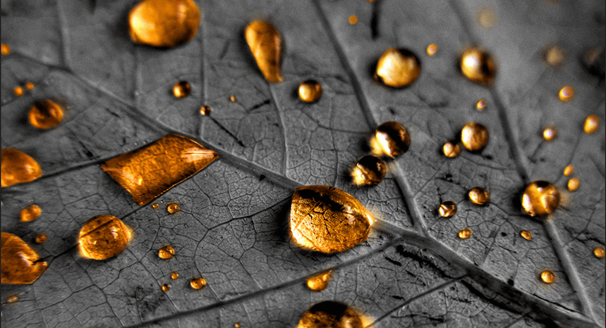 O que é chuva dourada?